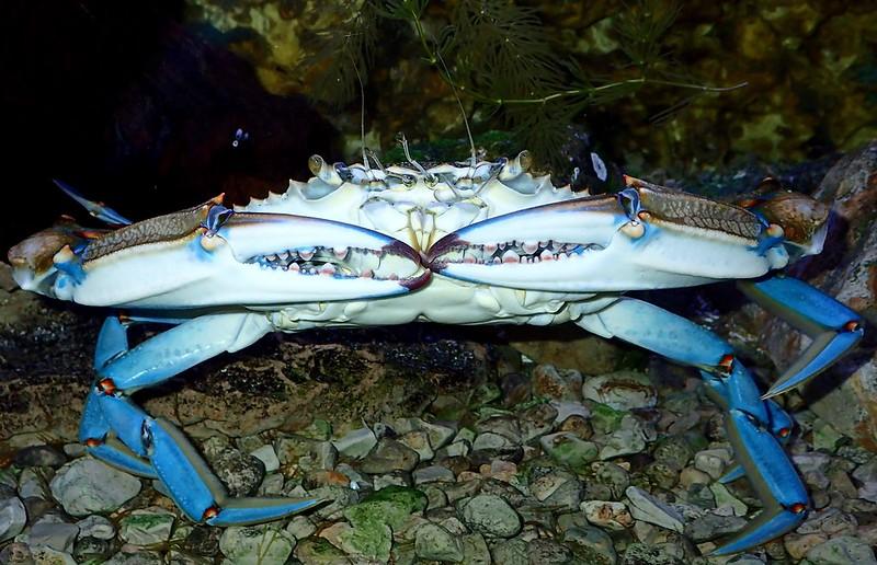 Sobre la condición humana, unicornios y cangrejos azules 33856220274_a86d0b52fc_c