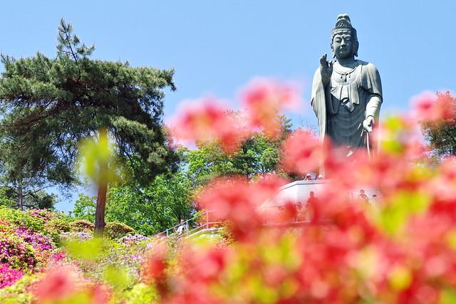Shiofune Kannon temple Azalea Festival 2017 50