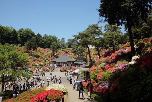 Shiofune Kannon temple Azalea Festival 2017 08