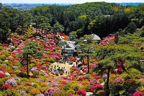 Shiofune Kannon temple Azalea Festival 2017 35