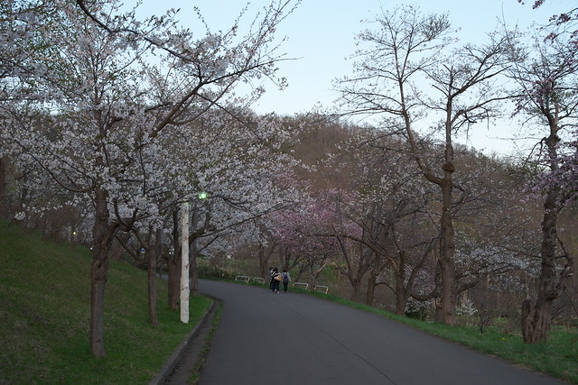 20170505東明公園の桜_05