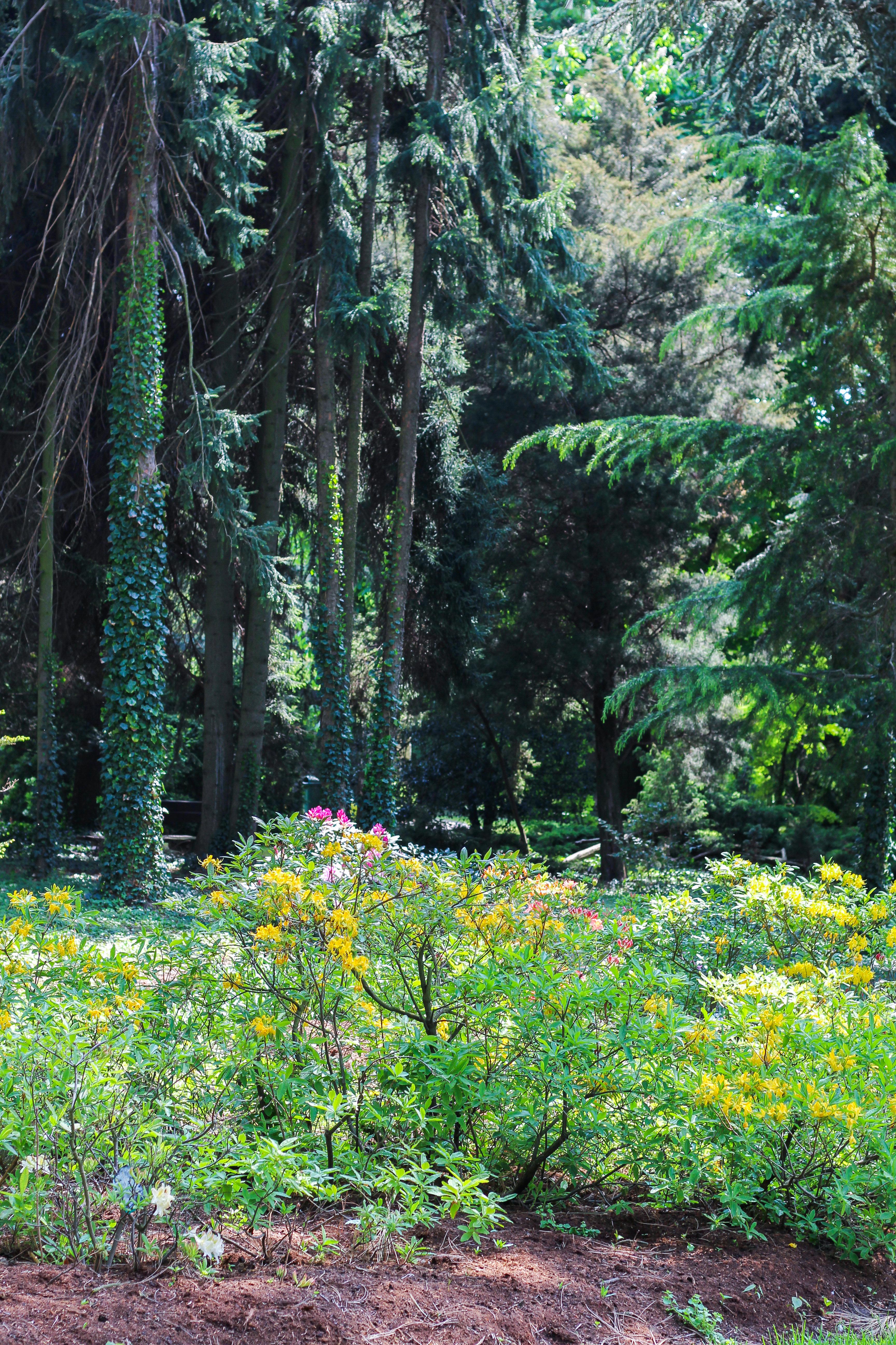 botanic garden nature