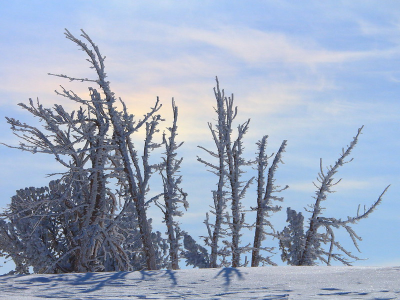IMG_2141 Dead Whitebark Pine at Minaret Vista