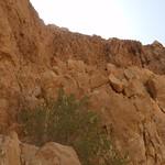 Assaggi di deserto 4