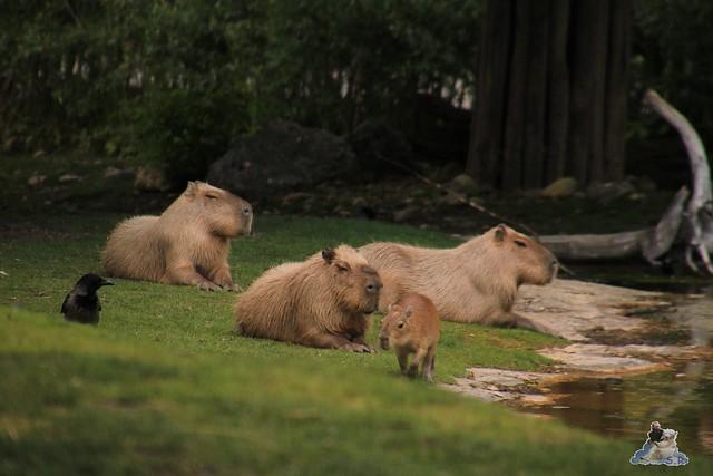 Tierpark Schönbrunn 29.04.2017 183