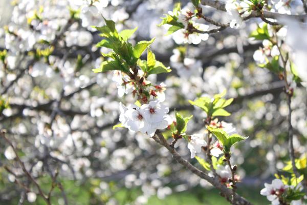 rochester ny highland park spring