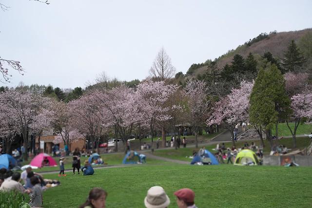 20170505栗山公園の桜_13
