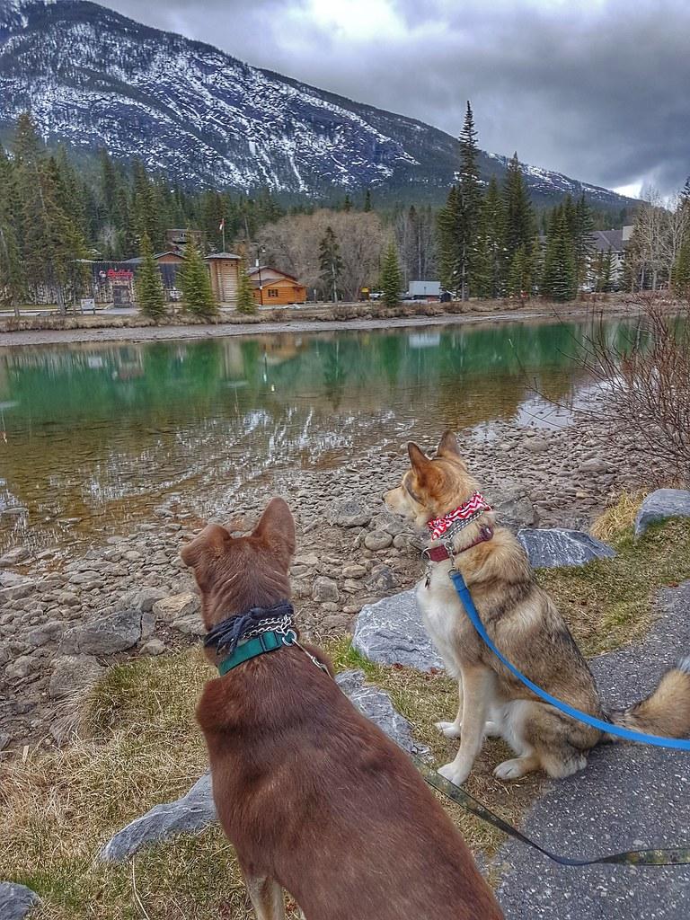 Bow River Banff Morning Walk