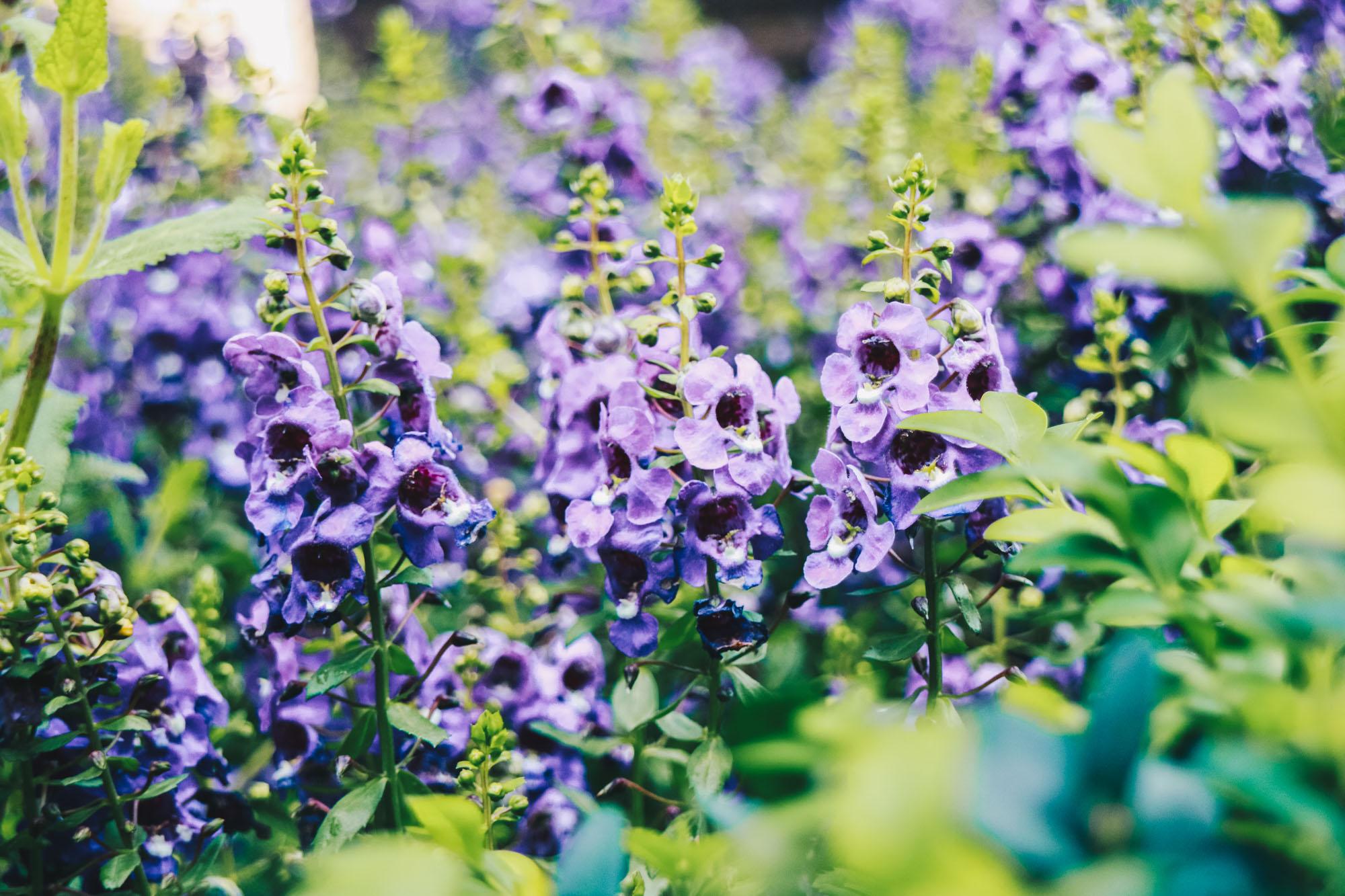 Blue-beauties-floral-display-gardensbythebay-darrenbloggie8