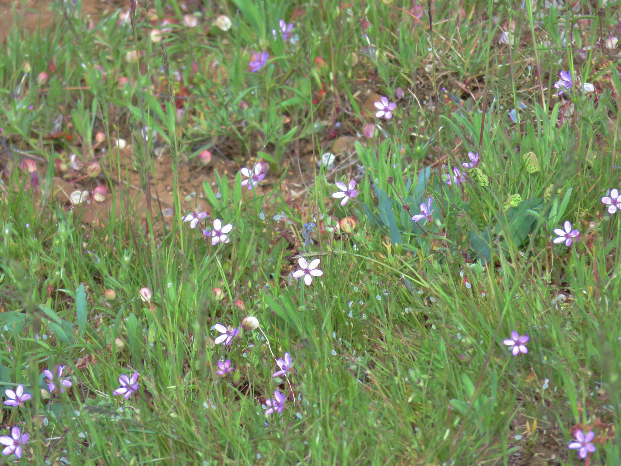 Various small wildflowers