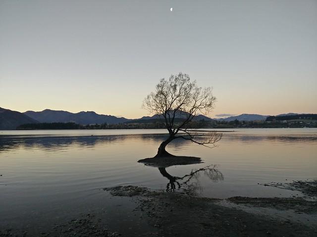 Wanaka Tree at sunset