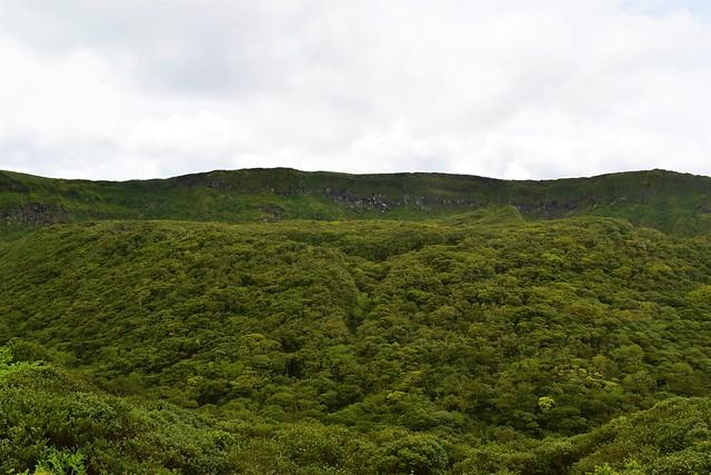 八丈富士 火口の森林