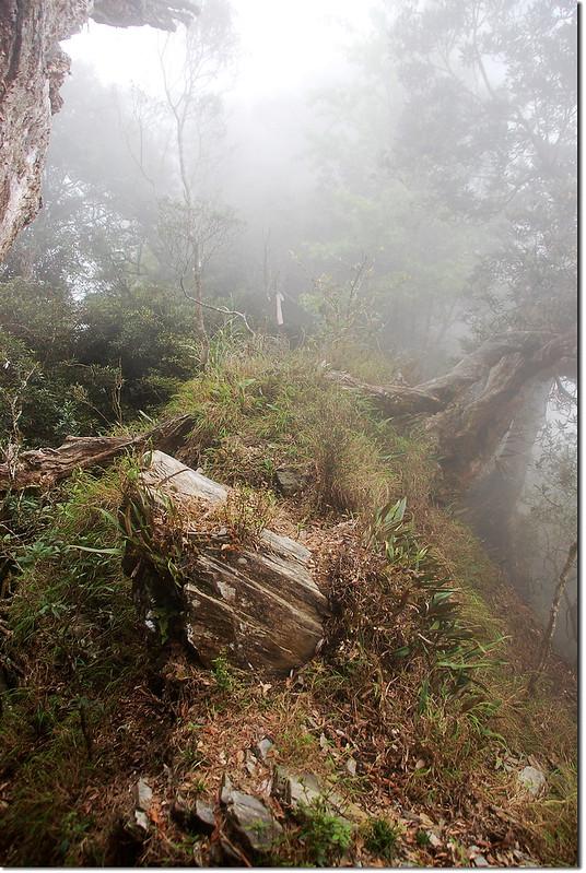 西大武山~1899峰稜線 (16)