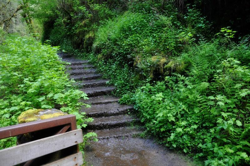 Silver Creek Path @ Mt. Hope Chronicles