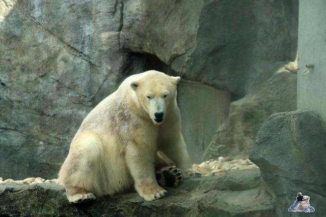 Tierpark Schönbrunn 29.04.2017 277