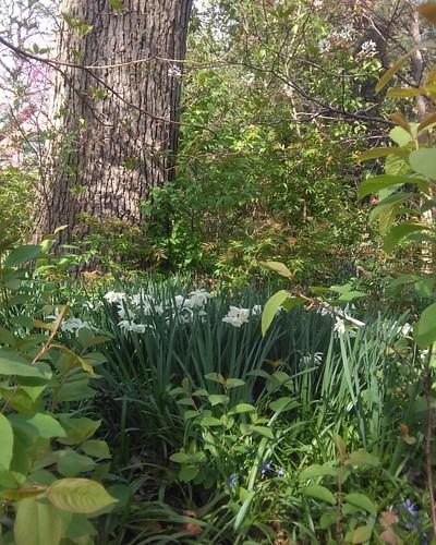 White in the shade #toronto #wychwoodpark #latergram #flowers #lilies