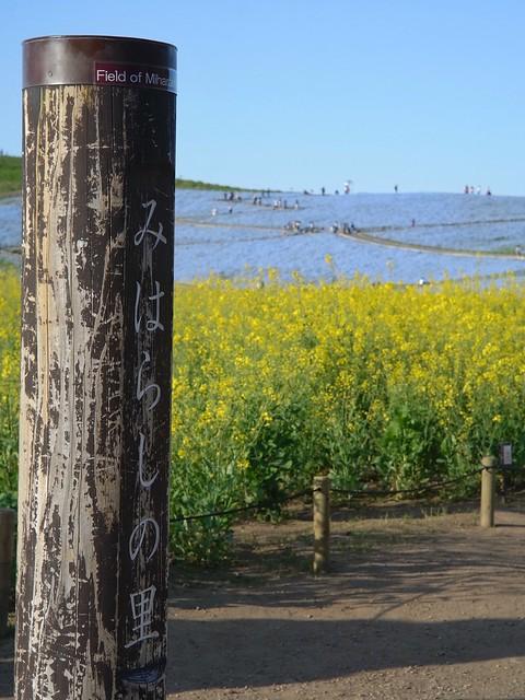 Hitachi Seaside Park 1 (GXR Mount A12 + Jupiter-3 50mm F1.5)
