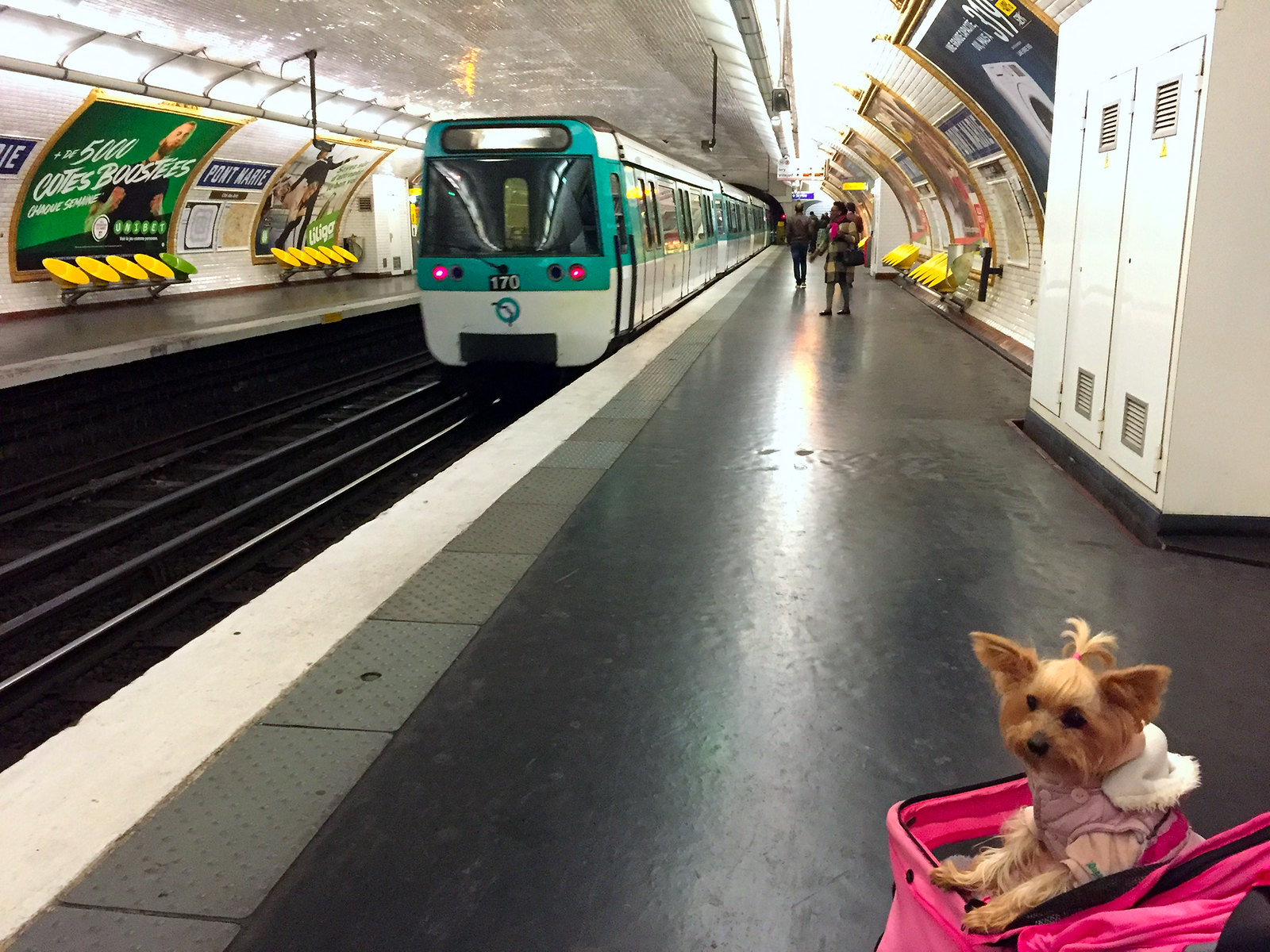 Viajar a Paris con Perro viajar a paris con perro - 34471059871 60e2ea98b6 h - Viajar a Paris con perro