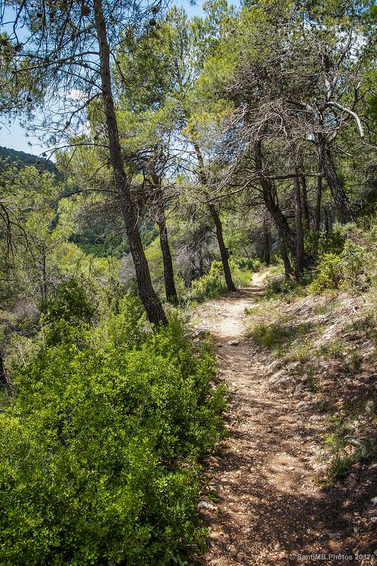 Camino de la Solana hacia el Mas d'en Toni