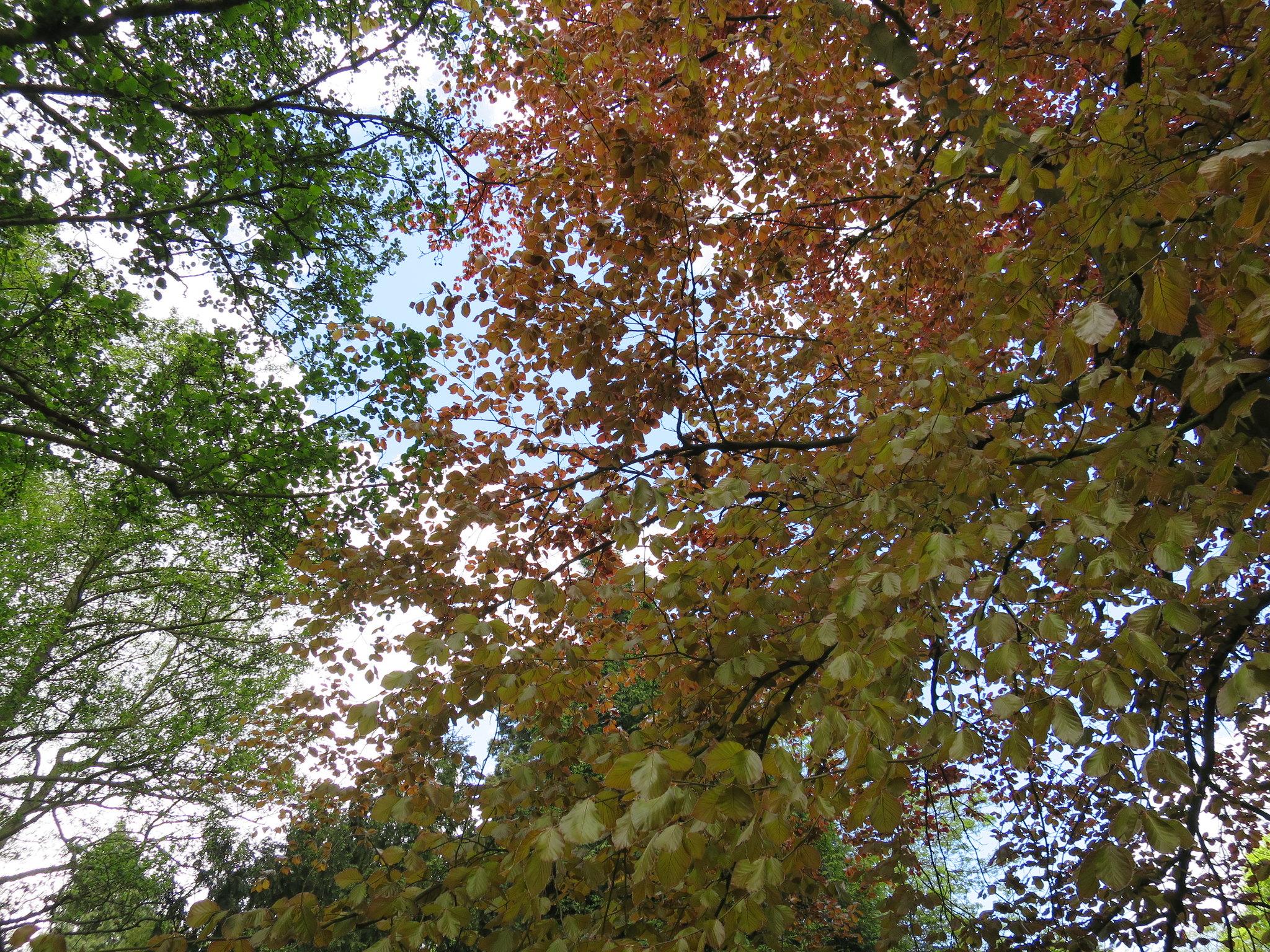 Coombe Country Park, Hello Im Clo, Culture Blogger 13