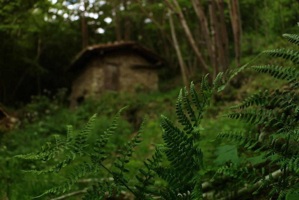 Deep in the woods XIX