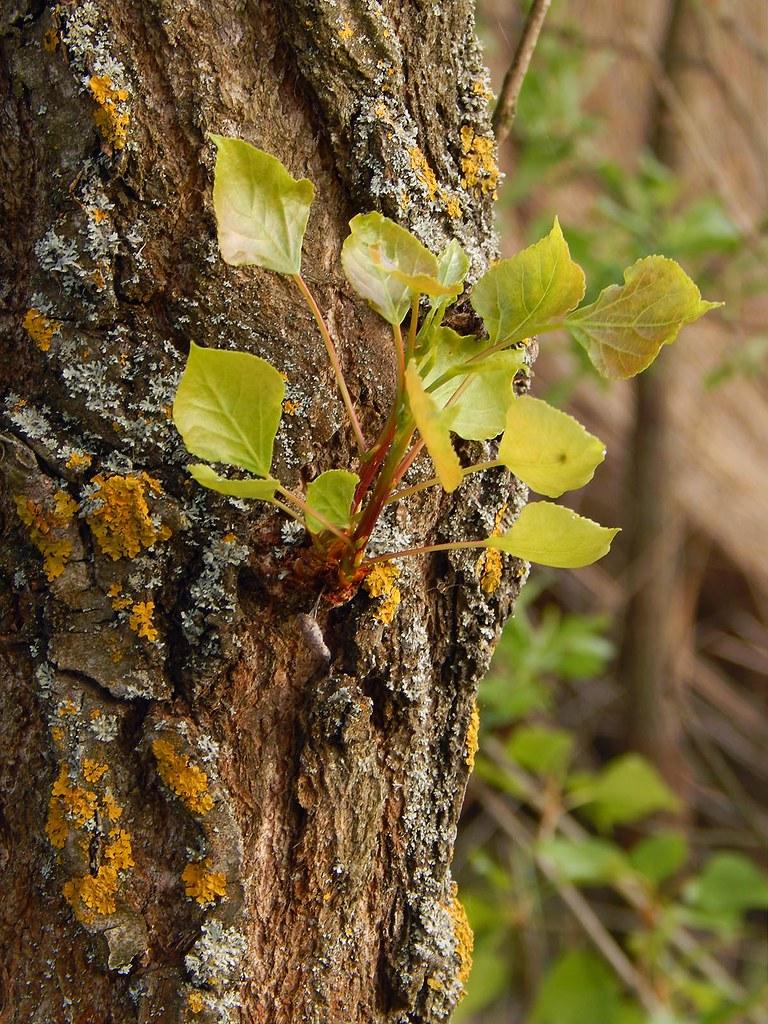 Листья и лишайники