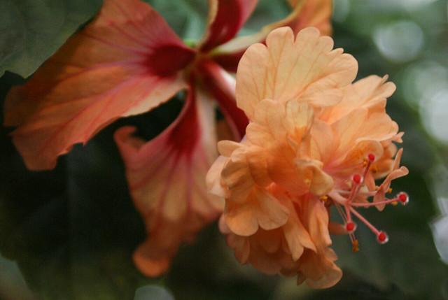 kasvitieteellinen  puutarha13