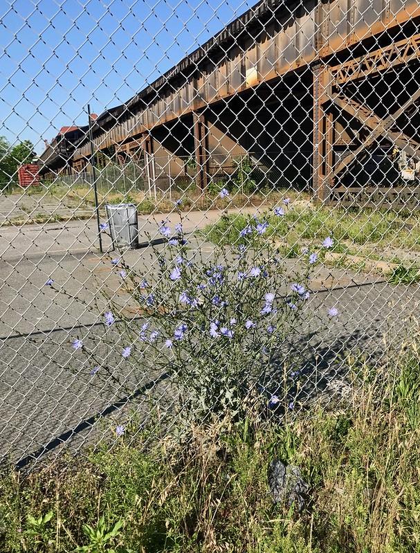 City Flowers / Flores da Cidade