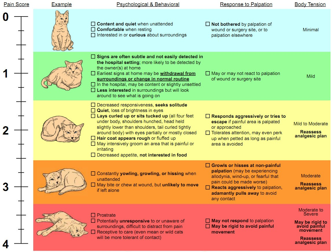 Cat pain scale