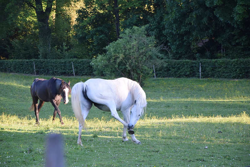 Horses 21.05 (12)