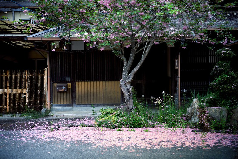 八重桜咲く家