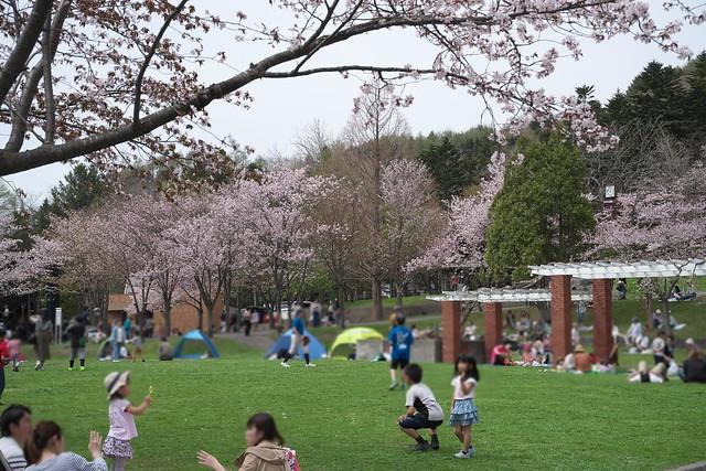 20170505栗山公園の桜_12