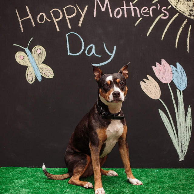 Mother's Day-5582