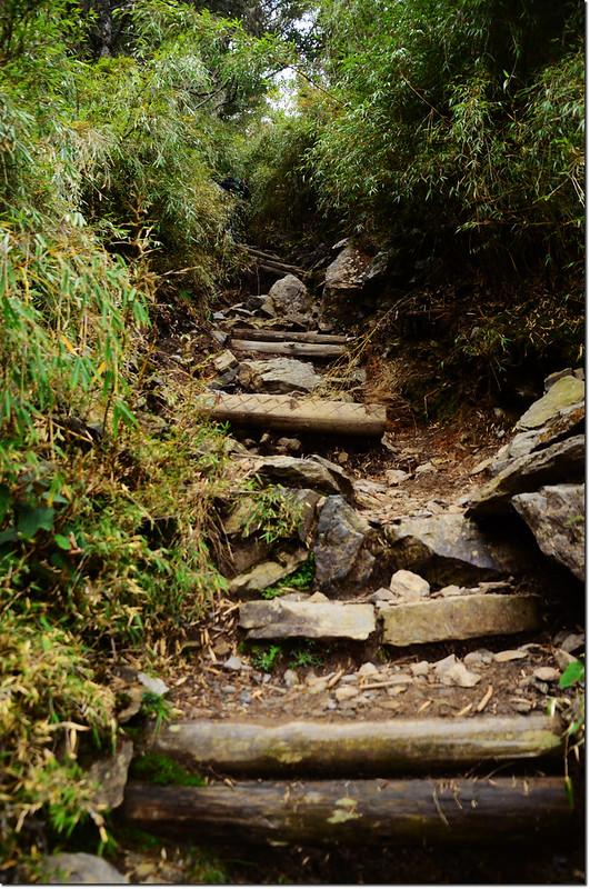 玉山前峰步道 6