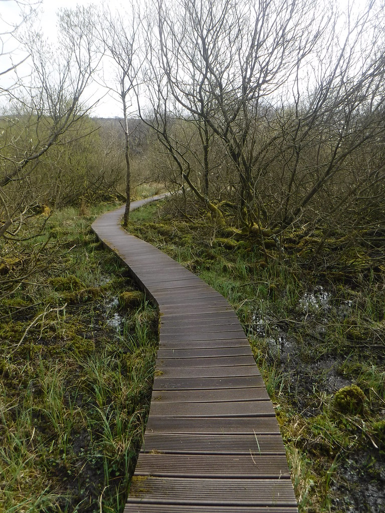 Malham Tarn Moss 19