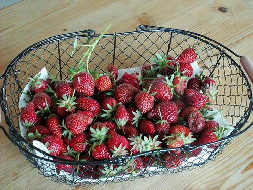 récoltes de saison 34682389591_4d1476898a