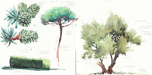 Seto de alibustre, pino piñonero y olivo