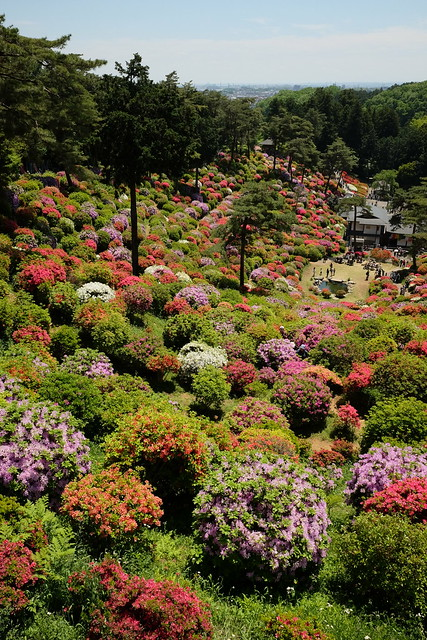Shiofune Kannon temple Azalea Festival 2017 26