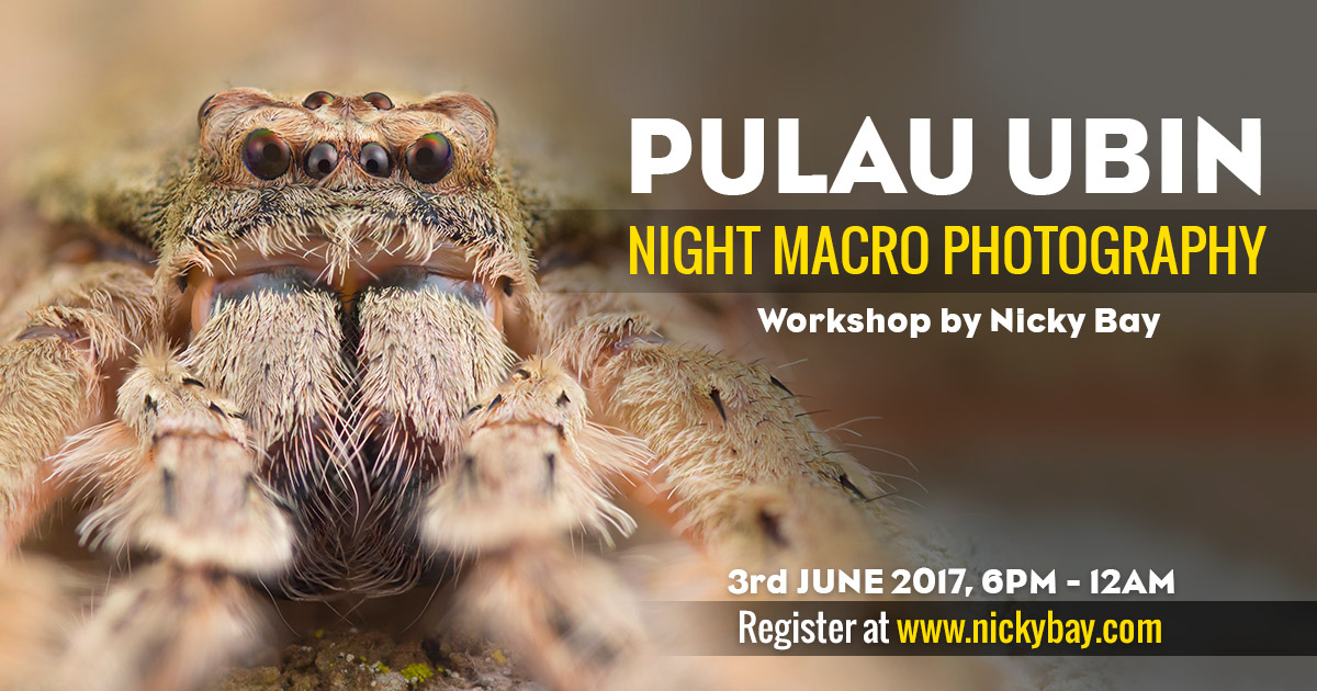 Night Macro Photography Workshop @ Pulau Ubin, 3 June 2017
