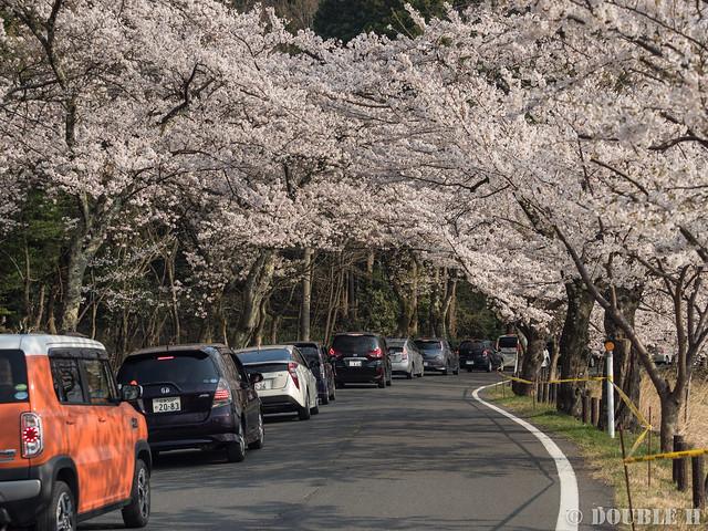 Kaidu-Osaki at 2017 Spring (5)
