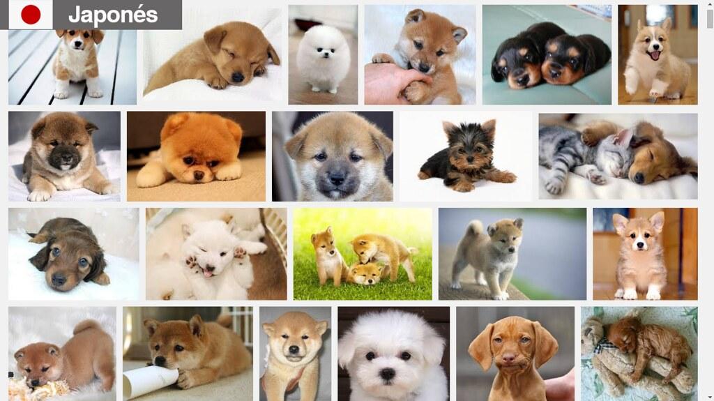 Buscando cachorros en japonés