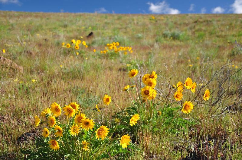Yakima Skyline Hike