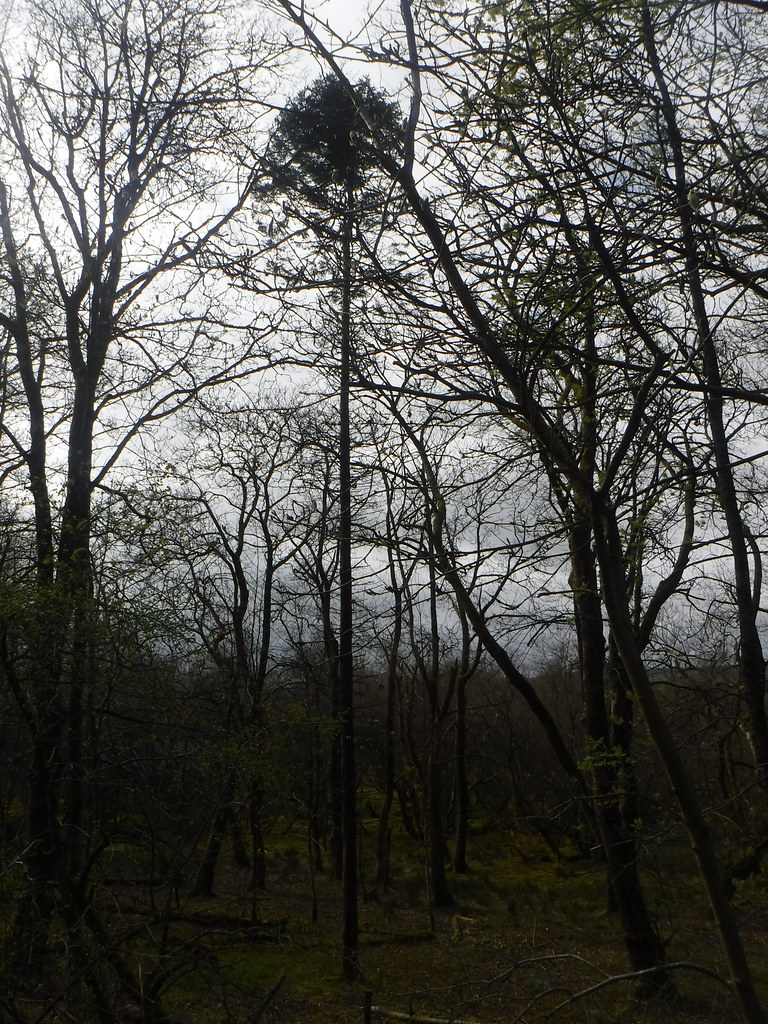 Near Malham Tarn 3