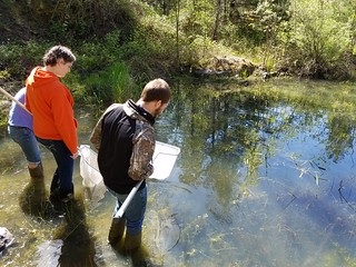 Pond Amphib Sampling