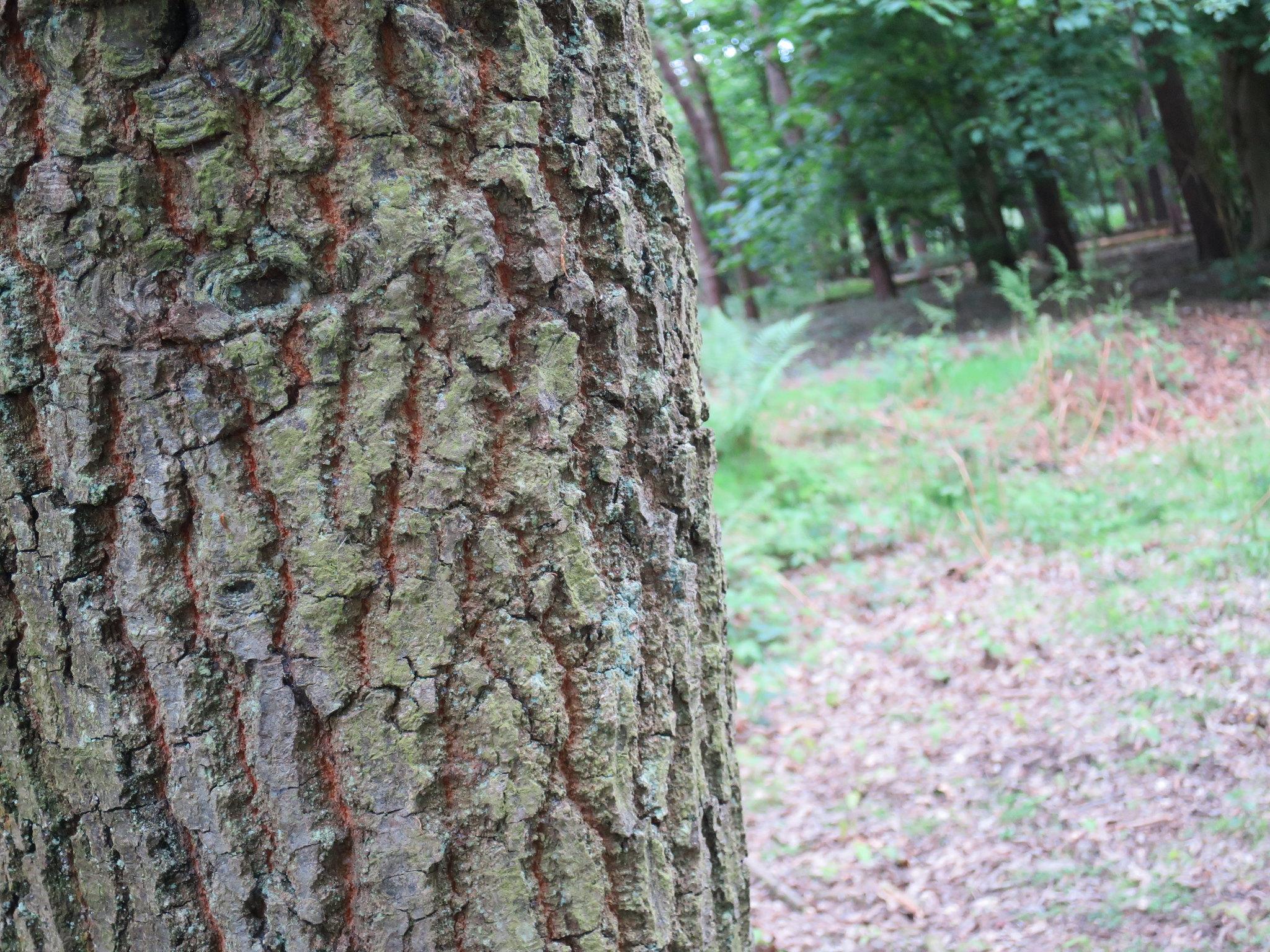 Coombe Country Park, Hello Im Clo, Culture Blogger 19