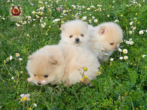 Puppies Litter D
