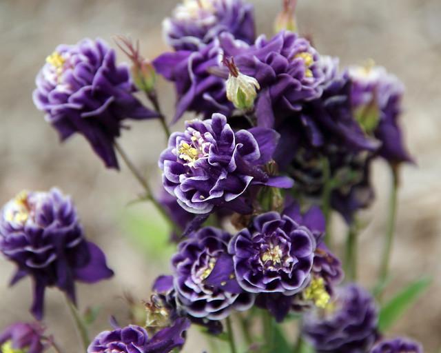 20170514_Botanic_Garden_027
