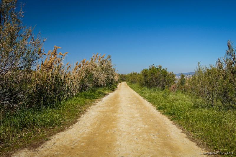 Camí de Ca l'Arana