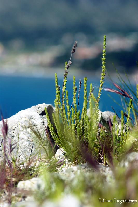 Растения в крепости