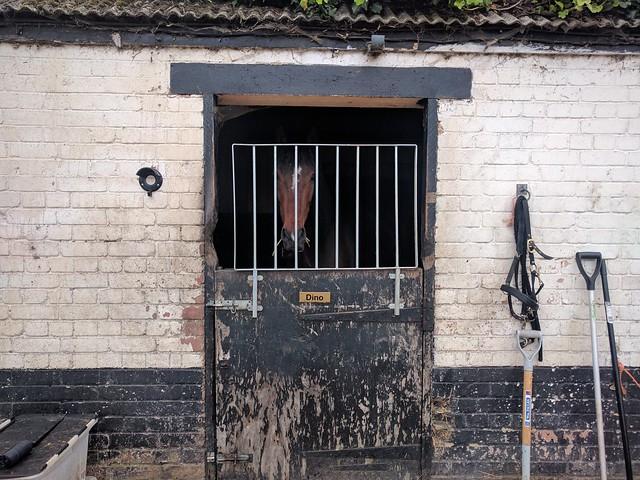 Pony prison